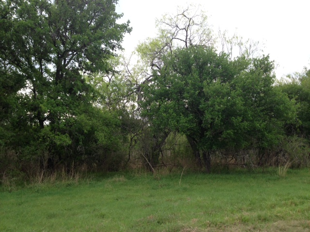 8.9 acres Oakwood Circle, George West, Texas 78022