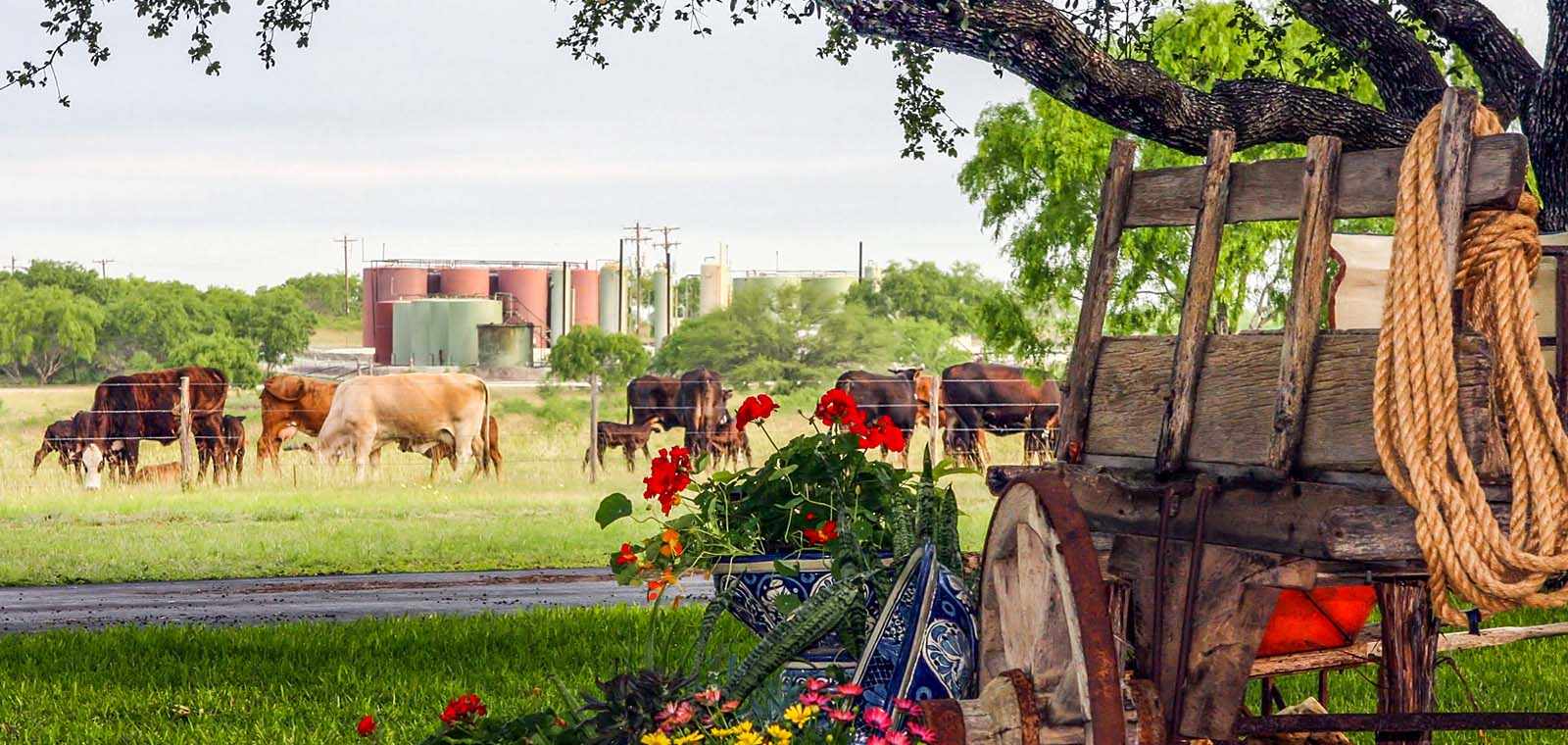 Ranch with Horses | Desert Flower Realty