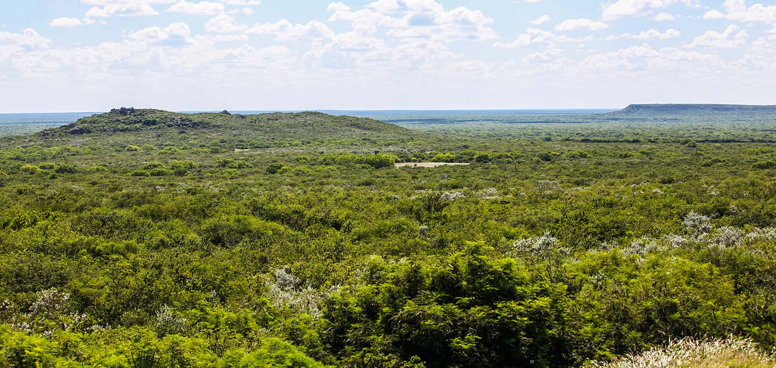 Beautiful View of Forest in Texas| Desert Flower Realty