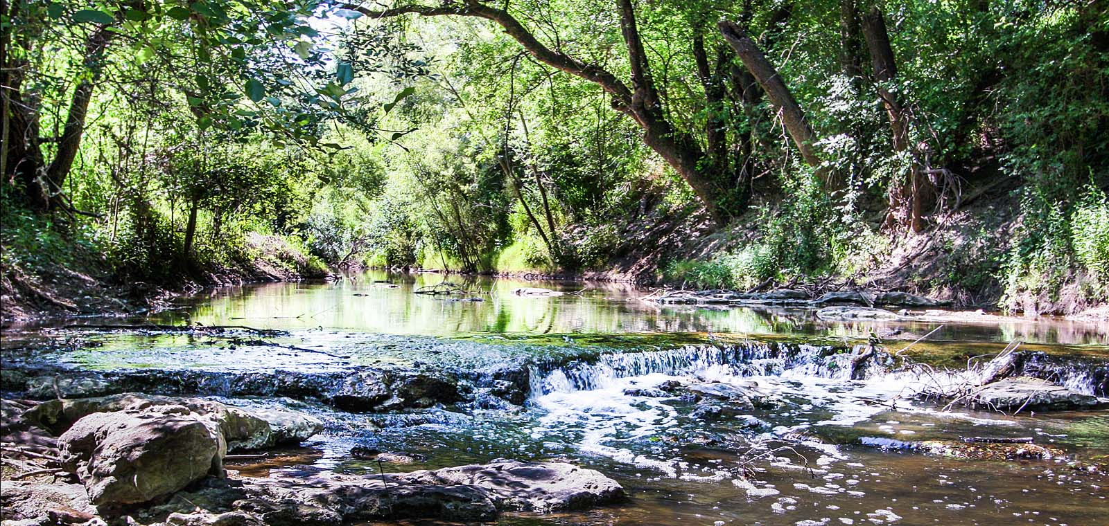 River in a Forest in Texas | Desert Flower Realty