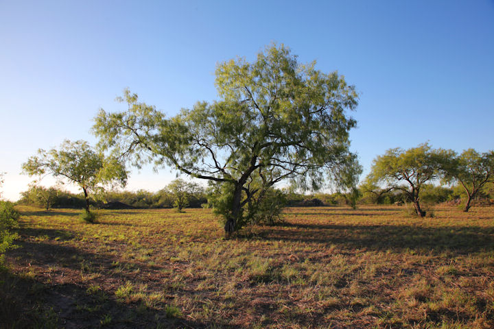 A acre ranch in 555 FM 1596, George West, Texas 78022