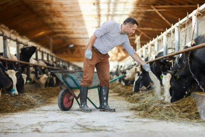 Health is Wealth, Even for Farm Animals